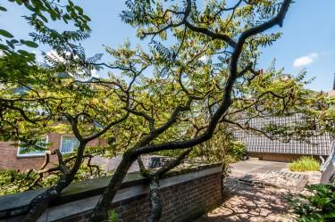 Dachterasse Baum